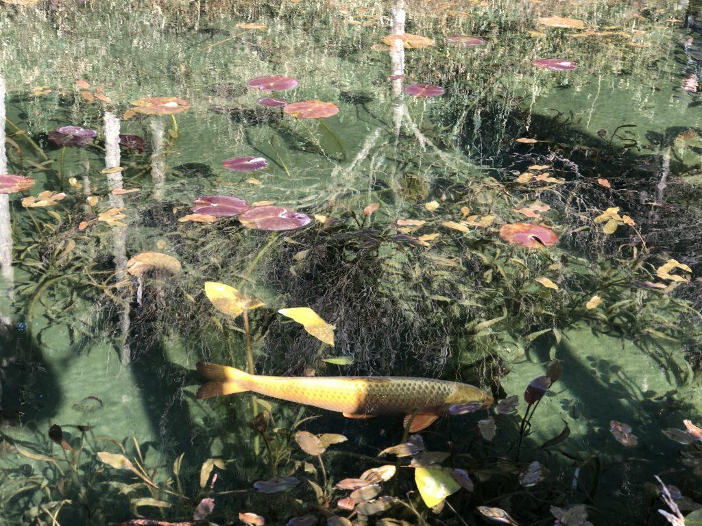 岐阜県関市 名もない池 通称モネの池