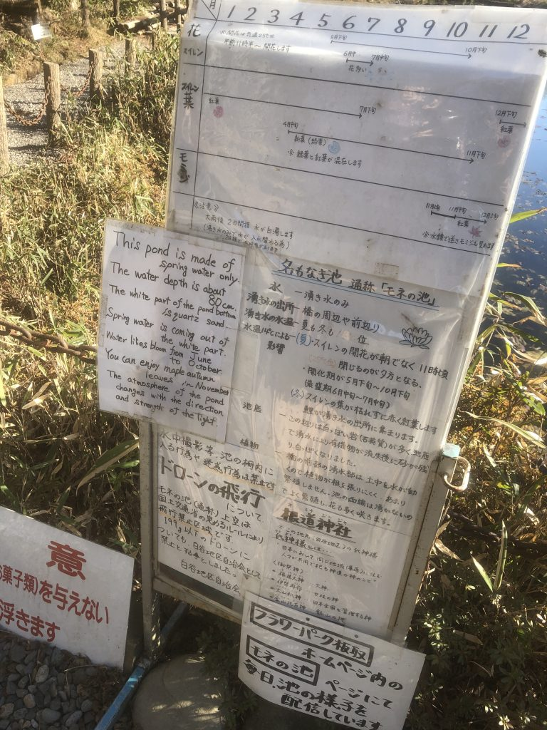 岐阜県関市 名もなき池 話題のモネの池